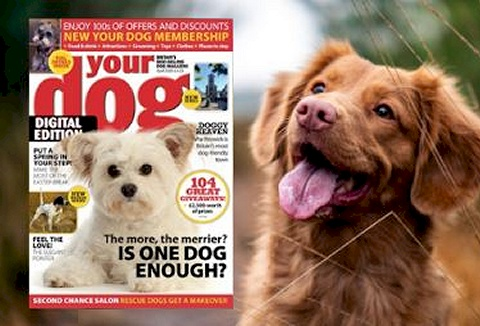 Link to the Your Dog website