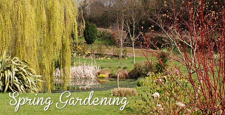 Spring Gardening - Browse our great range of value garden tools, furniture and spring bedding plants.